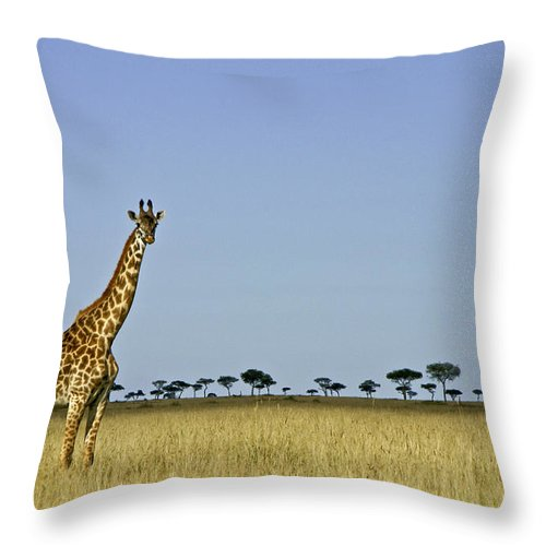 Africa Throw Pillow featuring the photograph Majestic Giraffe by Michele Burgess