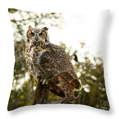 Great Horned Owl Throw Pillow featuring the photograph Malicious Intent by Heather King