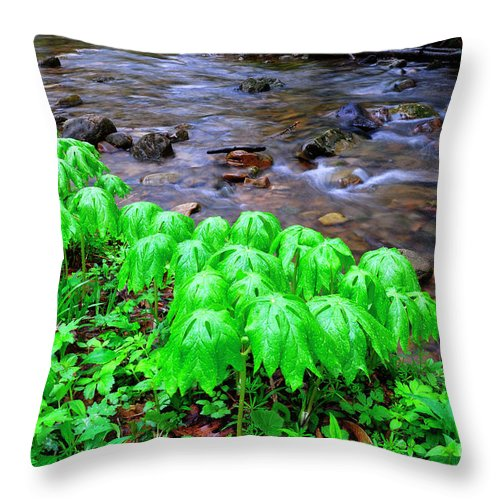 Mayapple Throw Pillow featuring the photograph May-apples And Middle Fork Of Williams River by Thomas R Fletcher