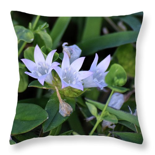 Mexican Clover Throw Pillow featuring the photograph Mexican Clover by William Tasker