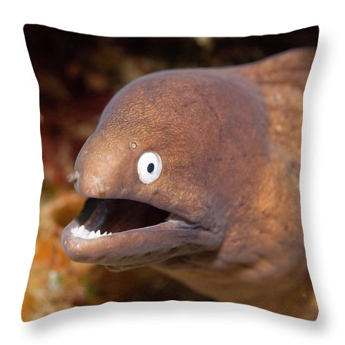 Moray Throw Pillow featuring the photograph Moray by MotHaiBaPhoto Prints