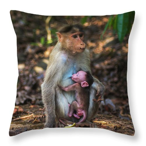 Monkey Throw Pillow featuring the photograph Mother And Baby by Abhishek S Padmanabhan