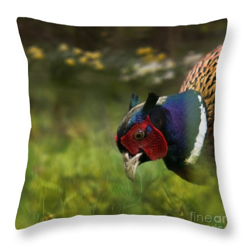 Spring Throw Pillow featuring the photograph Mr Pheasant by Angel Ciesniarska