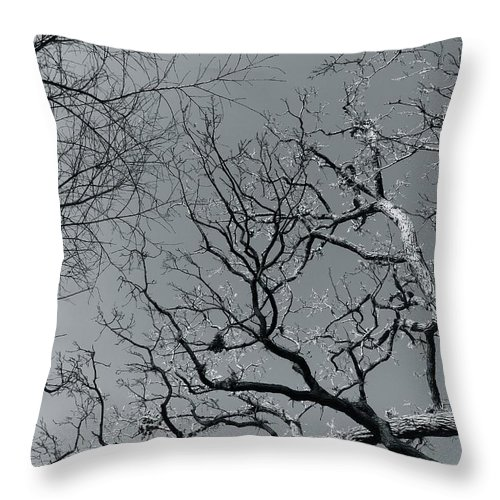 Trees Throw Pillow featuring the photograph oak by Julian Grant