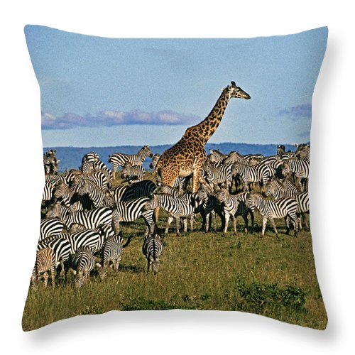 Africa Throw Pillow featuring the photograph Odd Man Out by Michele Burgess