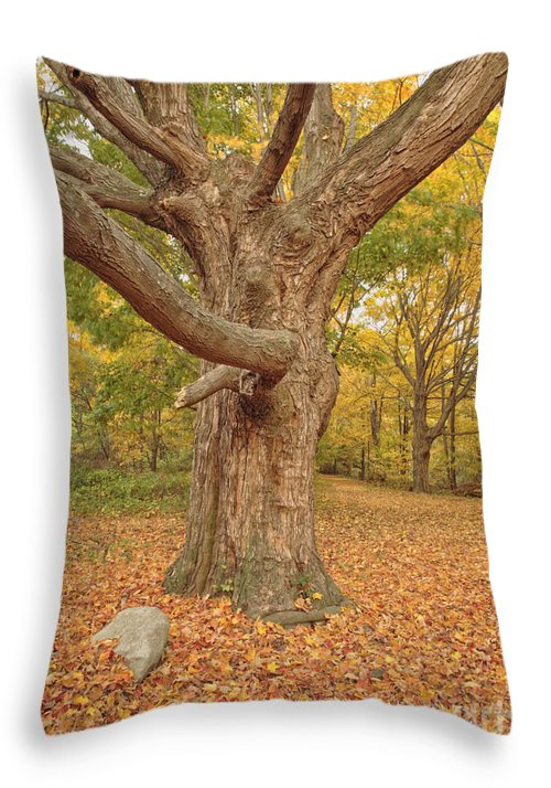 Fall Throw Pillow featuring the photograph Odiorne Point State Park - Rye New Hampshire by Erin Paul Donovan