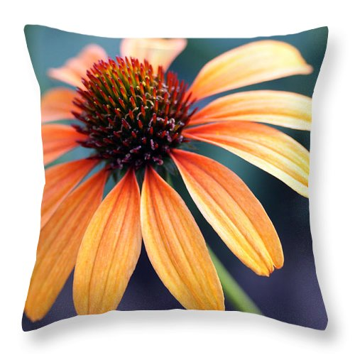 Landscape Throw Pillow featuring the photograph Orange Coneflower by Mary Haber