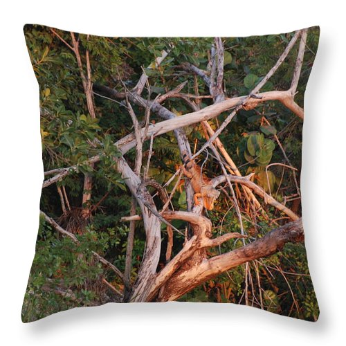 Sunset Throw Pillow featuring the photograph Orange Iguana by Rob Hans