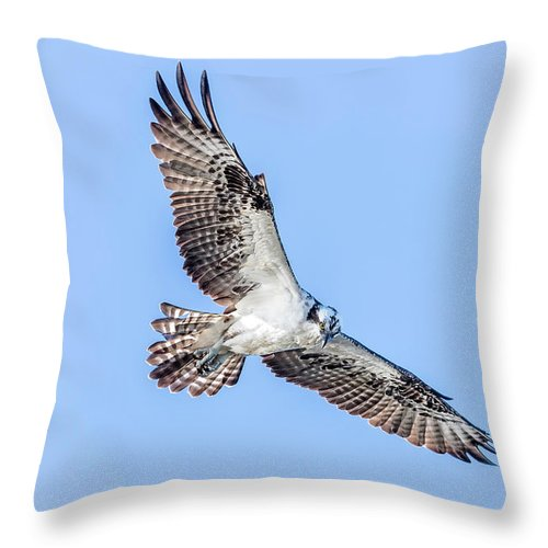 Osprey Throw Pillow featuring the photograph Osprey by Les Lenchner