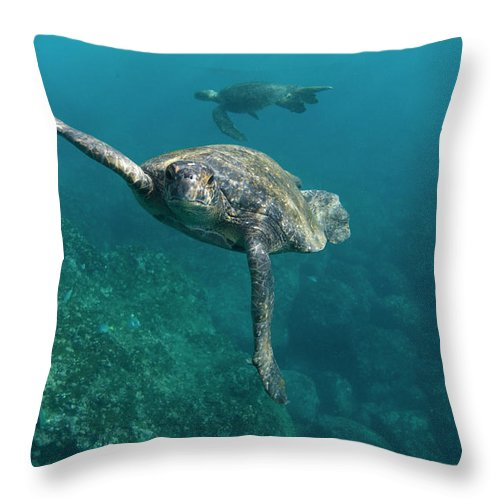 Mp Throw Pillow featuring the photograph Pacific Green Sea Turtle Chelonia Mydas by Pete Oxford