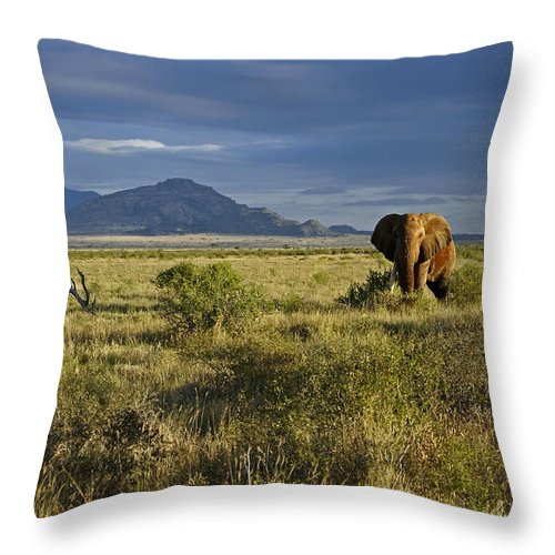 Africa Throw Pillow featuring the photograph Patriarch Of The Plains by Michele Burgess