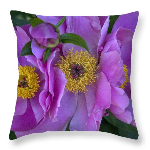 Flowers Throw Pillow featuring the photograph Peonies by Jessica Wakefield