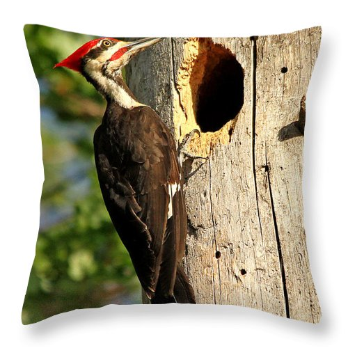Woodpecker Throw Pillow featuring the photograph Pileated #26 by James F Towne