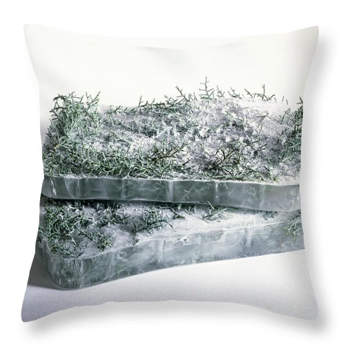 Composition Throw Pillow featuring the photograph Pine Twigs And Ice by Stefania Levi