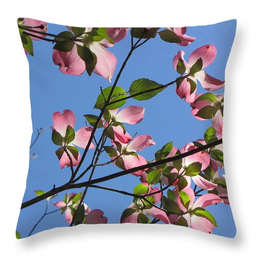 Tree Throw Pillow featuring the photograph Pink Dogwood by Sarah Houser