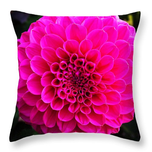 Flower Throw Pillow featuring the photograph Pink Flower by Anthony Jones