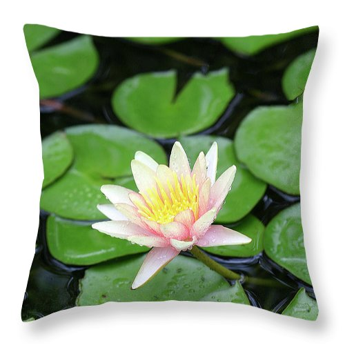Lily Throw Pillow featuring the photograph Pretty In Pink by Shari Jardina