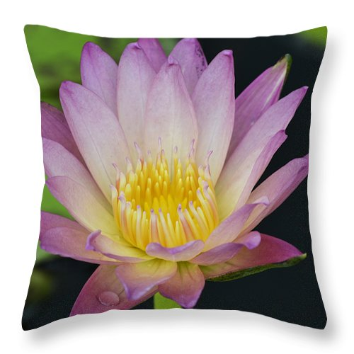 Water Lily Throw Pillow featuring the photograph Promises by Melanie Moraga