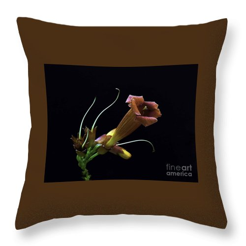 Flower Throw Pillow featuring the photograph Pure Elegance by Arnie Goldstein