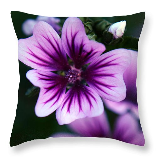 Purple Throw Pillow featuring the photograph Purple Beauties by Cherie Duran