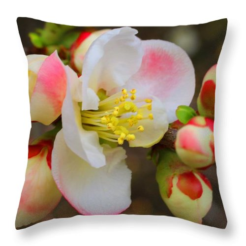 Quince Throw Pillow featuring the photograph Quince Toyo-nishiki by Kathryn Meyer