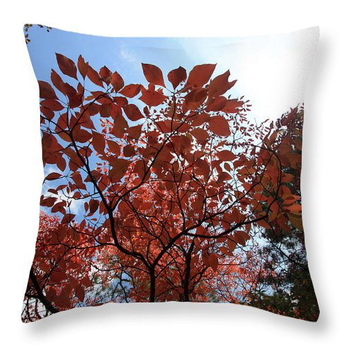 Trees Throw Pillow featuring the photograph Reaching For The Sun by Mary Haber