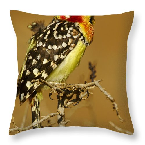 Africa Throw Pillow featuring the photograph Red And Yellow Barbet by Michele Burgess