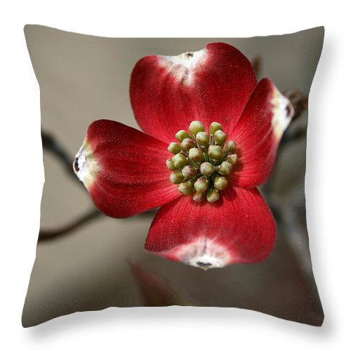 Flower Throw Pillow featuring the photograph Red Dogwood by Andrei Shliakhau