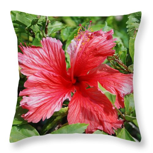 Red Throw Pillow featuring the photograph RED by Rob Hans