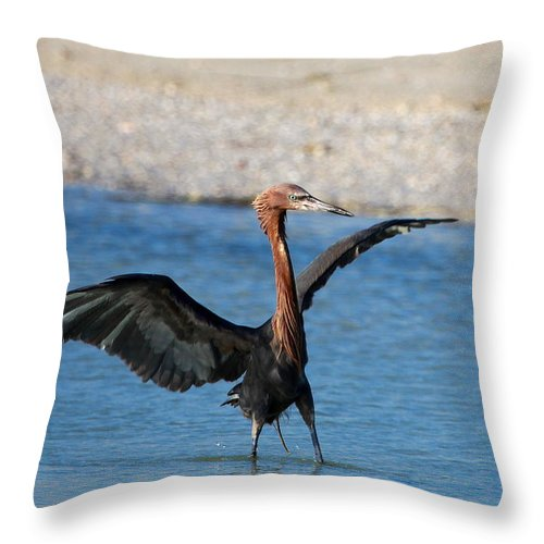 Reddish Egret Throw Pillow featuring the photograph Reddish Egret by Barbara Bowen