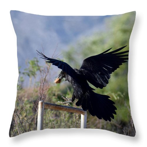 Raven Throw Pillow featuring the photograph Resident Raven by Tammy Windsor-Brown