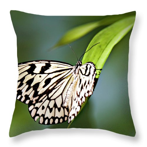 Butterfly Throw Pillow featuring the photograph Rice Paper Butterfly 5 by Walter Herrit