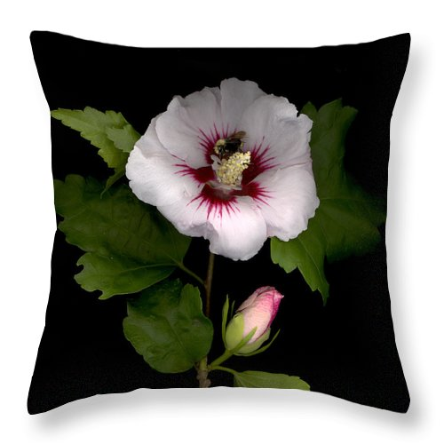 Rose Of Sharon Throw Pillow featuring the digital art Rose Of Sharon by Sandi F Hutchins