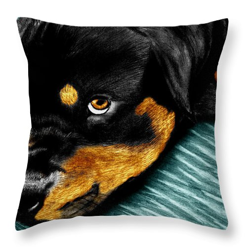 Rot Wilier Throw Pillow featuring the drawing Rotty by Peter Piatt