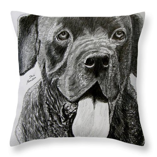 Dog Portrait Throw Pillow featuring the drawing Sampson by Stan Hamilton