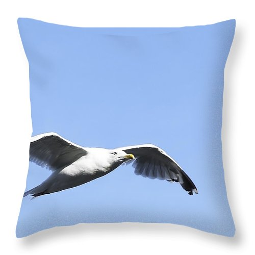 Bird Throw Pillow featuring the photograph Seagull by Svetlana Sewell
