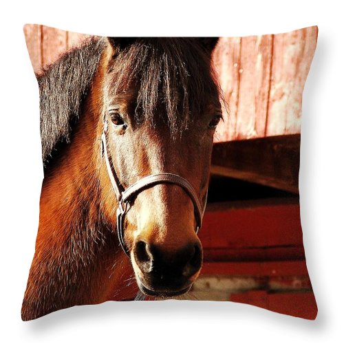 Horse Throw Pillow featuring the photograph Show And Tell by JAMART Photography