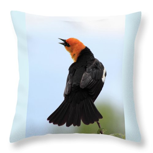 Yellow-headed Blackbird Throw Pillow featuring the photograph Showing Off by Shane Bechler