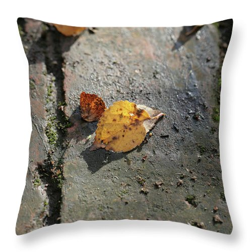 Silver Birch [silver Birch] Tree Tress Leaf Leaves [betula Pendula] Autumn [the Fall]england English British Cheshire Garden Gardens Golden Brown Brick Bricks Path Paths Throw Pillow featuring the photograph Silver Birch Leaves Lying On A Brick Path In A Cheshire Garden On An Autumn Day  England by Michael Walters
