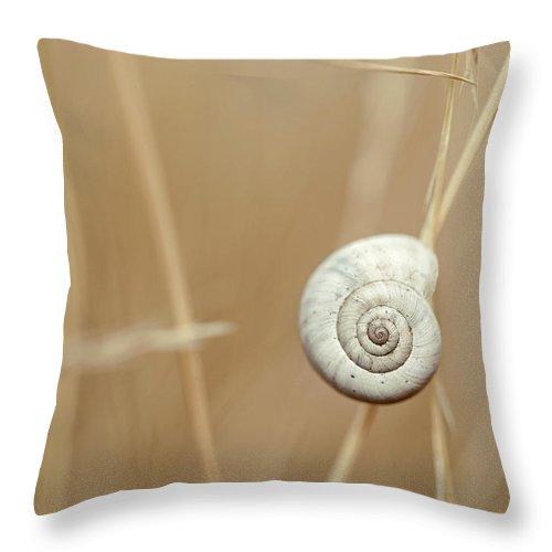 Autumn Throw Pillow featuring the photograph Snail On Autum Grass Blade by Nailia Schwarz
