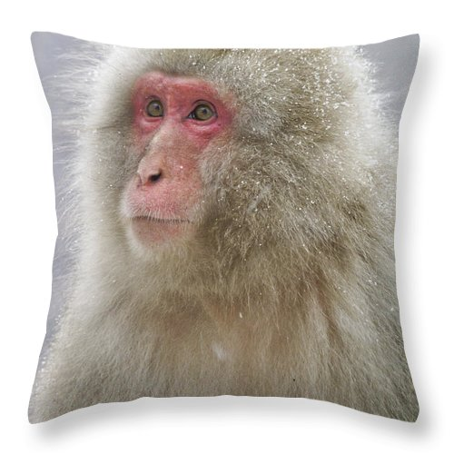 Japan Throw Pillow featuring the photograph Snow-dusted Monkey by Michele Burgess
