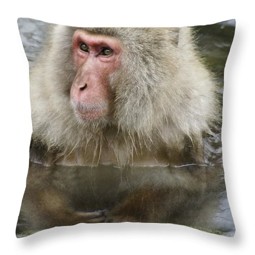 Snow Monkey Throw Pillow featuring the photograph Snow Monkey Bath by Michele Burgess