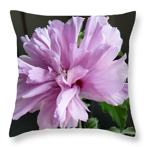 Phoyography.hibiscus Flower Floral Bloom Bush Pink Throw Pillow featuring the photograph So Pink by Karin Dawn Kelshall- Best