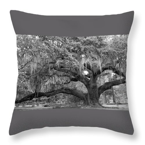 Tree Throw Pillow featuring the digital art Sprawling Live Oak by DigiArt Diaries by Vicky B Fuller