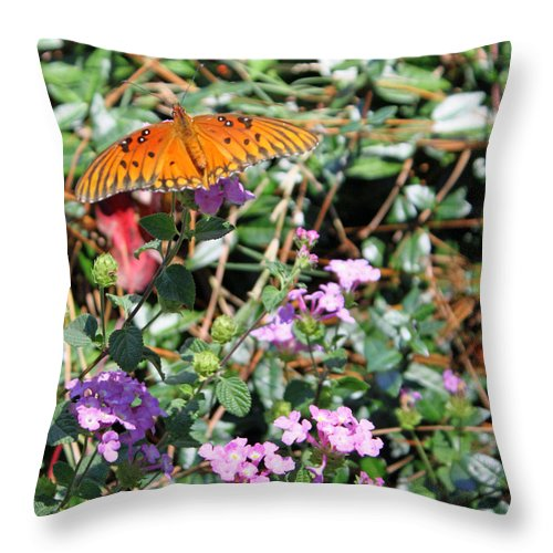 Moneta Longwing Butterfly Throw Pillow featuring the photograph Spread Your Wings by Suzanne Gaff