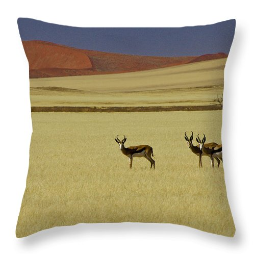 Africa Throw Pillow featuring the photograph Springbok At Sossusvlei by Michele Burgess