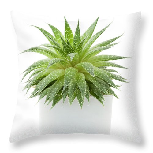 Succulent Throw Pillow featuring the photograph Succulent Plant 1 by Elena Elisseeva