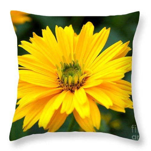 Macro Throw Pillow featuring the photograph Sun Flower by Joe Ng