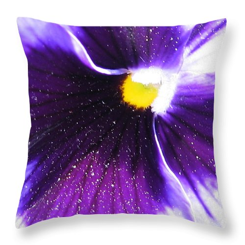 Pansy Throw Pillow featuring the photograph Sunburst Pansy by Tracy Male