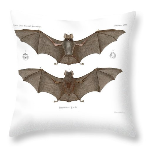 Bats Throw Pillow featuring the drawing Sundevall's Roundleaf Bat by A Andorff
